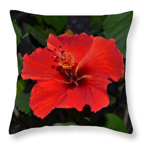 Red Throw Pillow featuring the photograph Red Hibiscus by Wanda J King