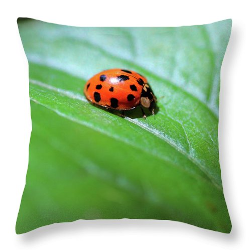 Lady Bug Throw Pillow featuring the photograph Red Lady by Adam Long