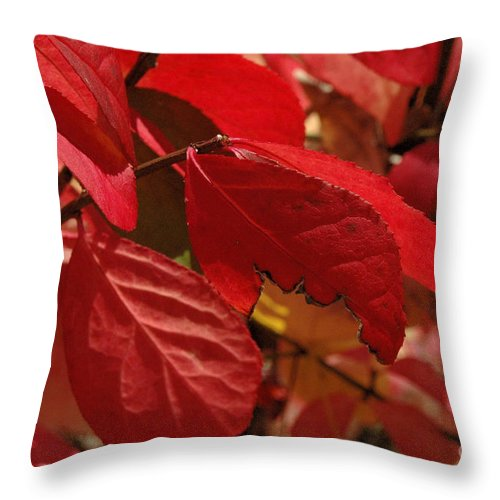 Leaves Throw Pillow featuring the photograph Red Light by Trish Hale