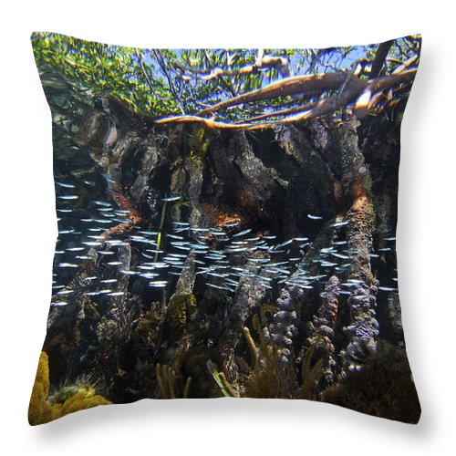 Mp Throw Pillow featuring the photograph Red Mangrove Rhizophora Mangle Aerial by Christian Ziegler