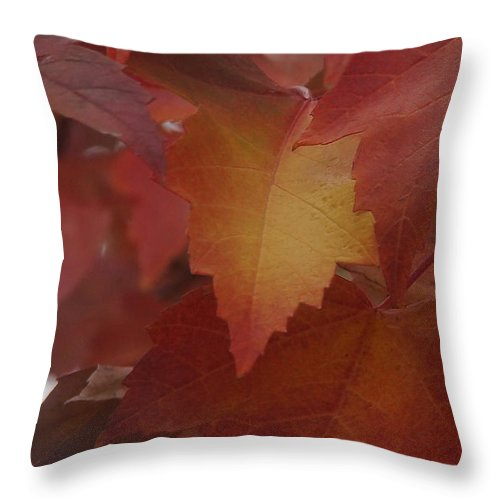 Red Throw Pillow featuring the photograph Red Maple With A Splash Of Gold by Mick Anderson
