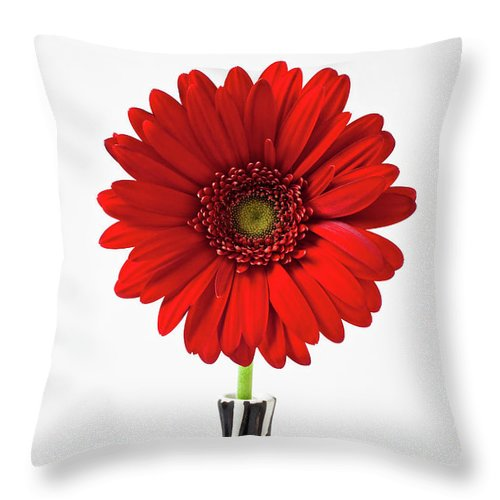 Mums Flowers Chrysanthemums Throw Pillow featuring the photograph Red Mum In Striped Vase by Garry Gay