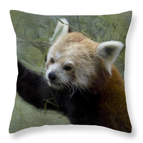 Nature Throw Pillow featuring the photograph Red Panda by Heiko Koehrer-Wagner