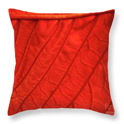 Poinsettia Throw Pillow featuring the photograph Red Poinsettia Leaf by Michael Waters