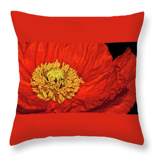 Poppy Throw Pillow featuring the photograph Red Poppy by Dave Mills