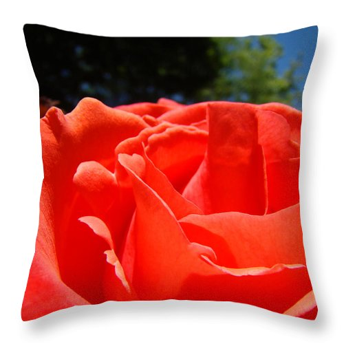 Rose Throw Pillow featuring the photograph Red Rose Flower Fine Art Prints Roses Garden by Baslee Troutman
