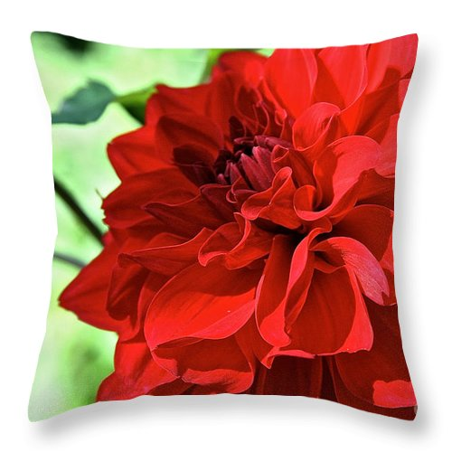 Outdoors Throw Pillow featuring the photograph Red Ruby Dahlia by Susan Herber
