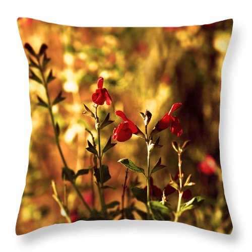 Red Salvia Throw Pillow featuring the photograph Red Salvia by Kelly Rader