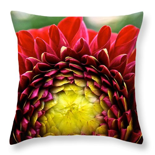 Outdoors Throw Pillow featuring the photograph Red Sunrise Dahlia by Susan Herber