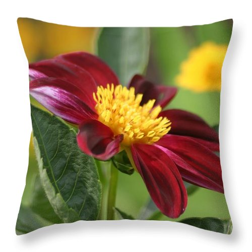 Floral Throw Pillow featuring the photograph Red Velvet by Living Color Photography Lorraine Lynch