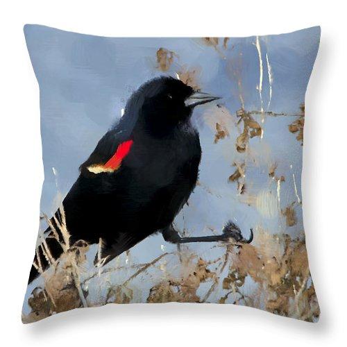 Red-winged Blackbird Throw Pillow featuring the photograph Redwing Blackbird by Betty LaRue