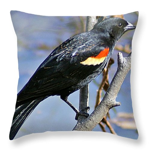 Redwinged Throw Pillow featuring the photograph Redwinged Blackbird I by Joe Faherty