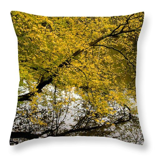 Tree Throw Pillow featuring the photograph Reflecting Autumn Tree by David Resnikoff