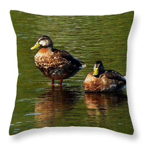 Animal Photograph Throw Pillow featuring the photograph Reflection On The River by Ms Judi