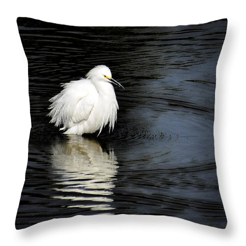 Snowy Egret Throw Pillow featuring the photograph Reflections Of An Egret by Saija Lehtonen
