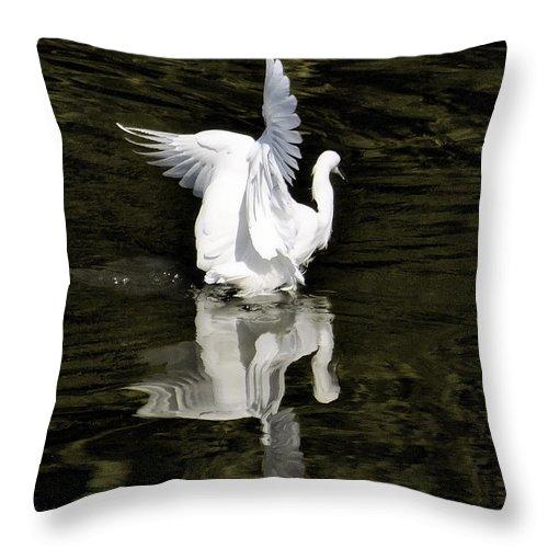 Snowy Egret Throw Pillow featuring the photograph Reflections Of Beauty by Saija Lehtonen