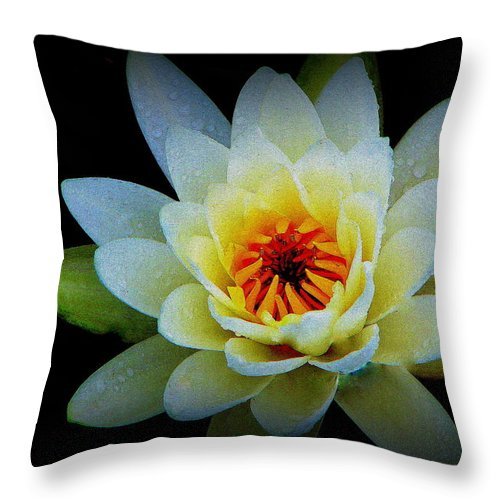 Water Lily Throw Pillow featuring the photograph Regard by Priscilla Richardson