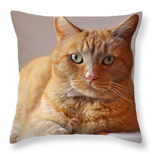 Cat Throw Pillow featuring the photograph Remo Resting by Mary Anne Williams