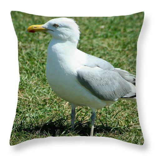 Beach Throw Pillow featuring the photograph Resting by Barbara S Nickerson