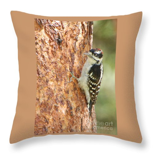 Birds Throw Pillow featuring the photograph Resting by Grace Grogan