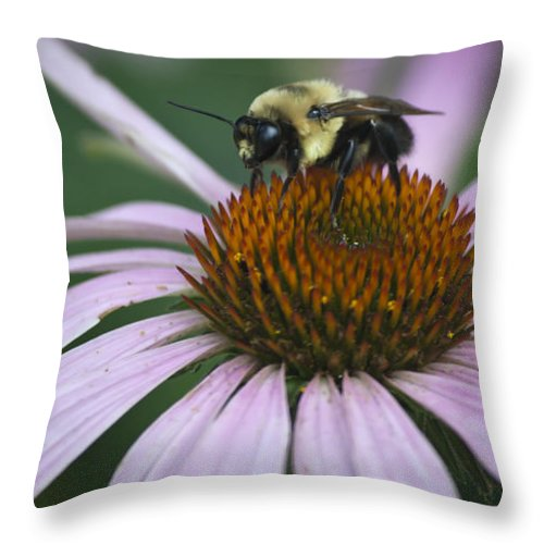 Coneflower Throw Pillow featuring the photograph Resting by Teresa Mucha