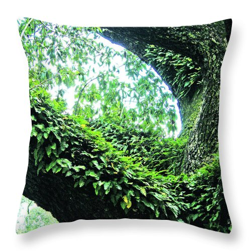 Oak Throw Pillow featuring the photograph Resurrection Fern by Lizi Beard-Ward