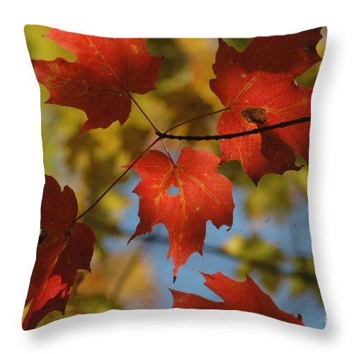 Red Throw Pillow featuring the photograph Rgb Plus Y by Trish Hale