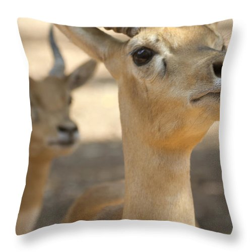 Impala Throw Pillow featuring the photograph Right Over There by Douglas Barnard