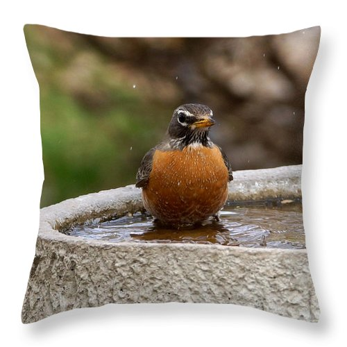 Robin Throw Pillow featuring the photograph Robin Bathing by Lori Tordsen