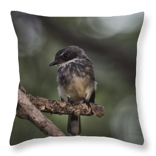 Robin Throw Pillow featuring the photograph Robin Top-End Australia by Douglas Barnard