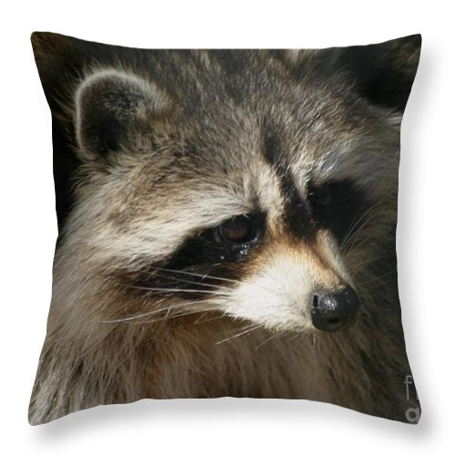 Wildlife Throw Pillow featuring the photograph Rocky Raccoon by Living Color Photography Lorraine Lynch