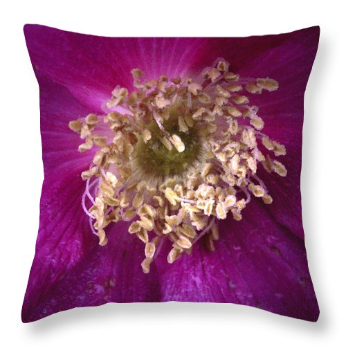Rosa_rugosa Throw Pillow featuring the photograph Rosa Rugosa The Beach Rose by Nancy Griswold