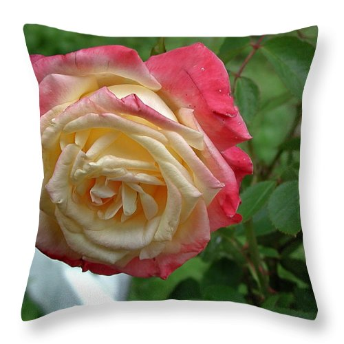 Rose Throw Pillow featuring the photograph Rose by Barry Doherty