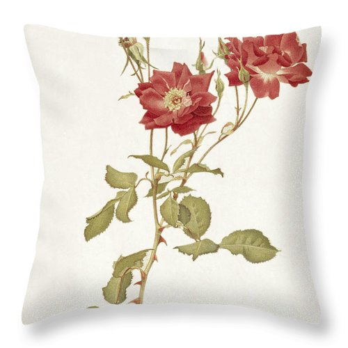 Flower Throw Pillow featuring the painting Rose Bourbon by Alfred Parsons