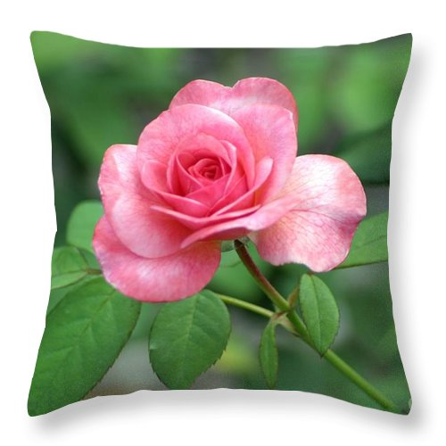 Roses Throw Pillow featuring the photograph Rose Parade by Living Color Photography Lorraine Lynch
