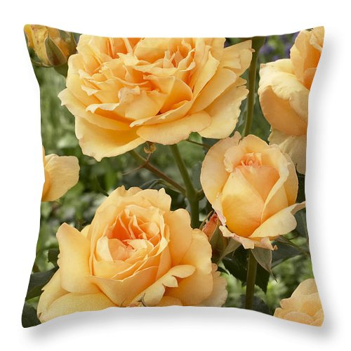 Vp Throw Pillow featuring the photograph Rose Rosa Sp Solo Mio Renaissance by VisionsPictures