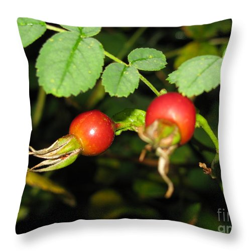 Rosehips Throw Pillow featuring the photograph Rosehips by Leone Lund
