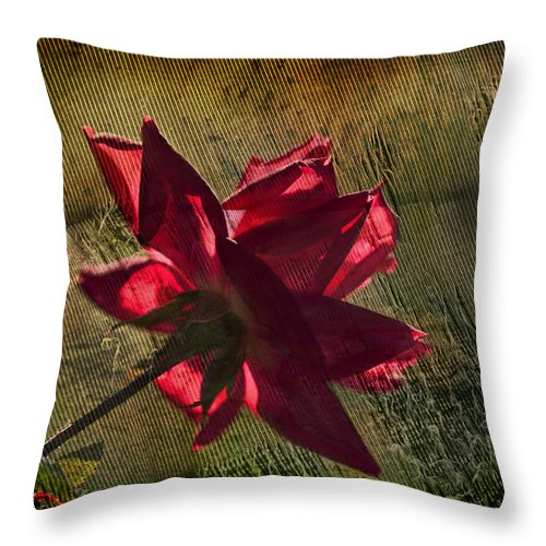 Rose Throw Pillow featuring the photograph Roses Are Red With A Bit Of Grunge by Kathy Clark