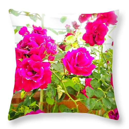 Roses Throw Pillow featuring the photograph Roses by Arianna Evans