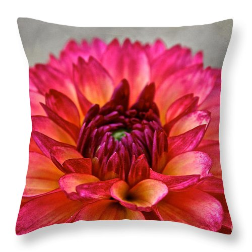 Landscape Throw Pillow featuring the photograph Rosy Dahlia by Susan Herber