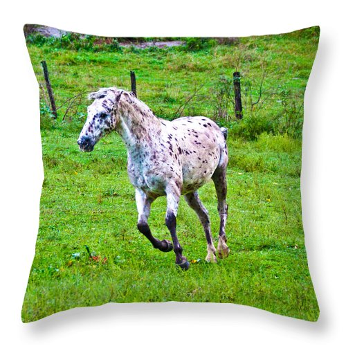 Horse Throw Pillow featuring the photograph Running It Off by Betsy Knapp