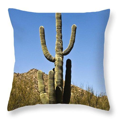 Botanical Throw Pillow featuring the photograph Saguaro Cactus by Scott Pellegrin