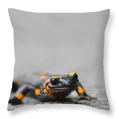 Salamander Throw Pillow featuring the photograph Salamander by Mats Silvan