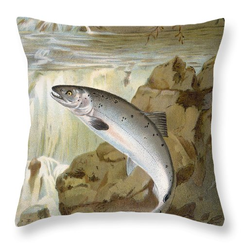 1900 Throw Pillow featuring the photograph Salmon, C1900 by Granger