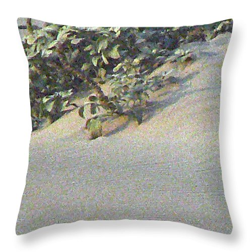 Beach Throw Pillow featuring the photograph Sand Dune Greenery by Pamela Patch