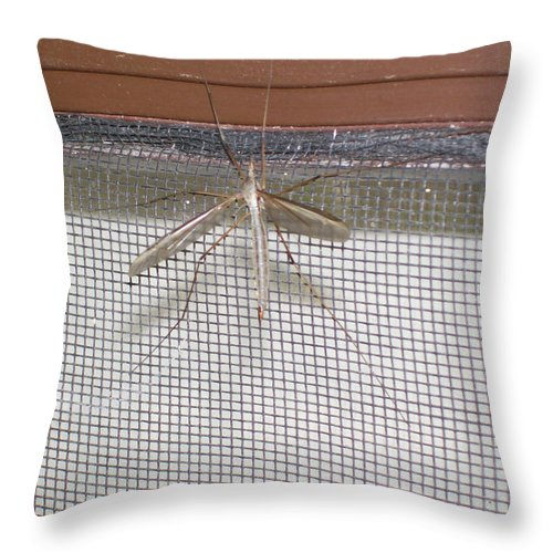 Nature Throw Pillow featuring the photograph Sandfly by Corinne Elizabeth Cowherd