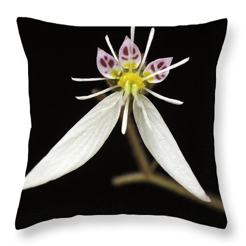 Flower Throw Pillow featuring the photograph Saxifraga by Fran Gallogly