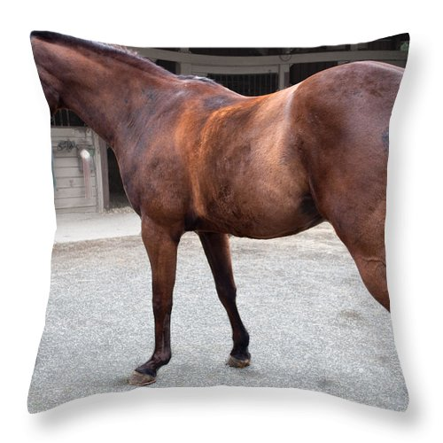 Throw Pillow featuring the photograph Sc-044-12 by Paulette B Wright
