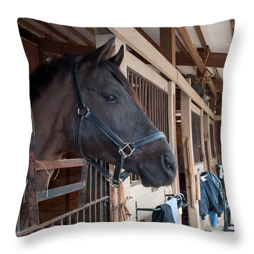 Throw Pillow featuring the photograph Sc-050-12 by Paulette B Wright