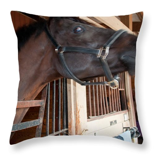Throw Pillow featuring the photograph Sc-054-12 by Paulette B Wright